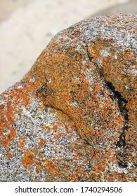 Orange lichen on granite rock, Flinders Island