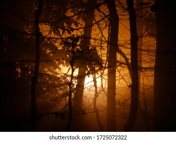 An orange light shining through a misty forest.