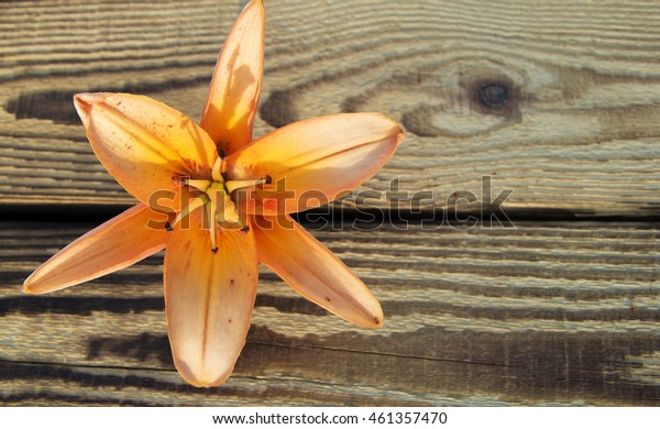 orange Lily on a background of wooden boards