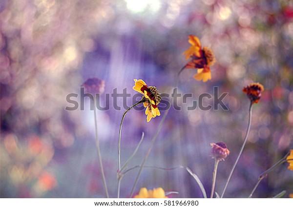 Orange little flowers in summer sun lights