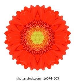 Orange Mandala Gerbera Flower Kaleidoscope Isolated on White Background