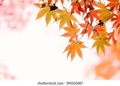 Orange maple leaf, selective focus with nice bokeh background