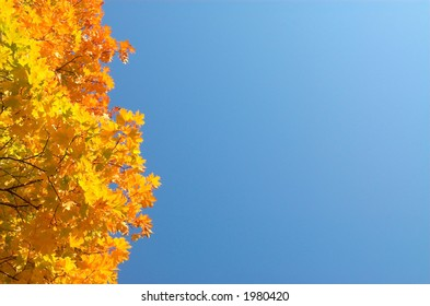 Orange maple leaves left