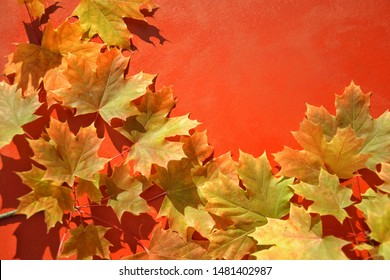 orange maple leaves on red background with copyspace, flat lay