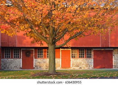 Orange Maple Tree in front of a red barn.