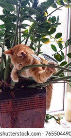 Orange menace, cute fuzzy orange kitten, tiger striped, playing in potted plant in bright sunny window, cat head, ears, paws, and tail