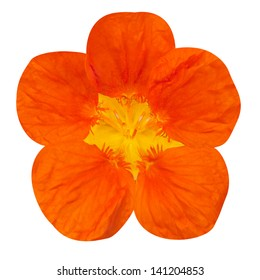 Orange nasturtium flower Isolated on White Background