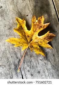Orange oak leave on wooden surface.