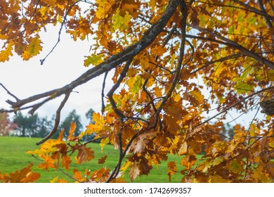 Orange oak leaves in autumn, Collepietra - Steinegg, South Tyrol, Italy. Concept: autumn landscape in the Dolomites
