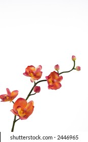 An orange orchid
