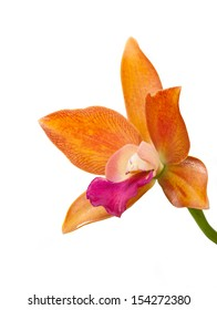 Orange Orchid Flower Isolated On White