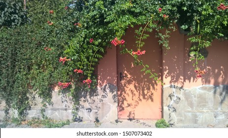 Orange oval door and stone wall and covered by Green branches of flowers in summer period.