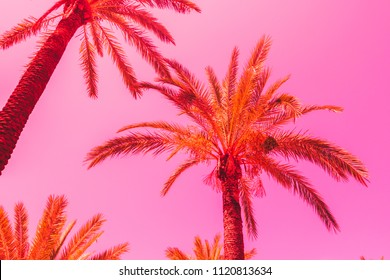 orange palm trees against the pink sky. bright neon colors. minimal and surreal. summer vacation.