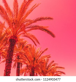 orange palm trees against the pink sky. bright neon colors. minimal and surreal. summer vacation. urban style