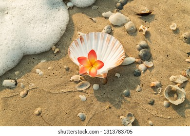 Orange plumeria in sea shell on beach and sea bubble