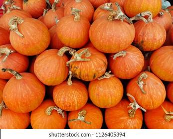 Orange Pumkins,Yellow Pumkins