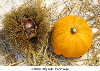 orange pumpkin and chestnut in hedgehogs are the typical fruits of the fall season