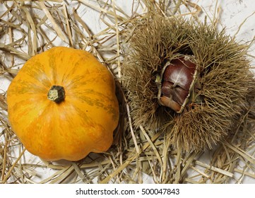 orange pumpkin and chestnut are the typical fruits of autumn