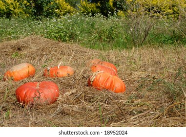 orange pumpkin in the field