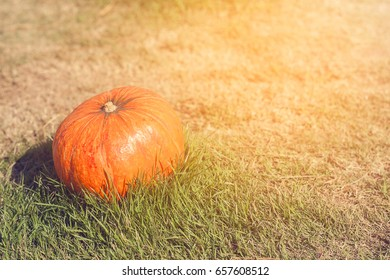 Orange pumpkin in green grass sun bright. Autumn harvest Thanksgiving or Halloween. Pumpkin closeup on green grass. Blurred background