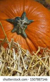 Orange Pumpkin on Hay/Wheat Straw Vertical Close-Up