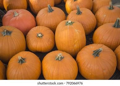 Orange pumpkin. A lot of pumpkins on the street. Beautiful photo with pumpkins