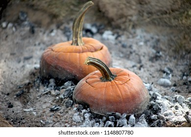 Orange pumpkin soup pots are roasting over an open bed of hot embers. This is an image depicting colonial times. Squash stew is cooking over ashes.