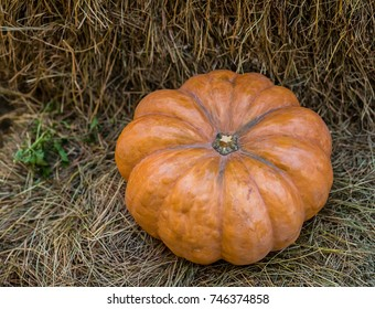 orange pumpkin symmetrical ribbed close-up. Symbol of harvest on a natural background