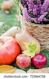 orange pumpkins, apples and purple heather