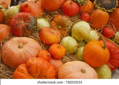 Orange pumpkins and cabbage on straw