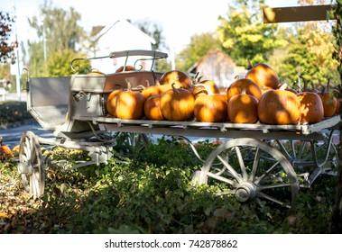 Orange pumpkins in cart,Autumn decoration