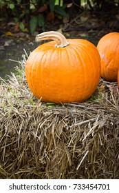Orange pumpkins for Halloween Party