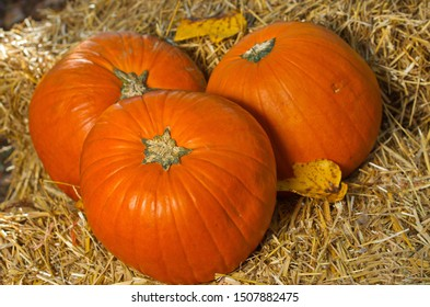 Orange Pumpkins on Hay/ Wheat Straw