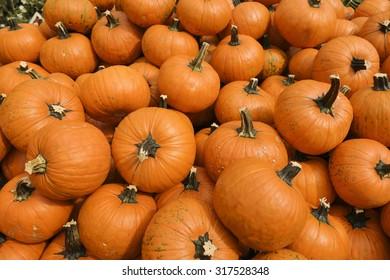 Orange pumpkins on the market