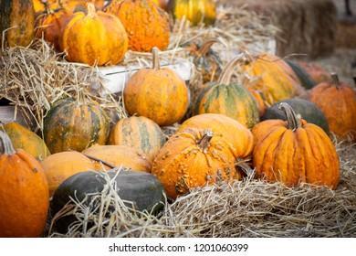 Orange pumpkins at outdoor farmer market. Pumpkin patch