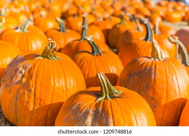 Orange pumpkins at outdoor farmer market