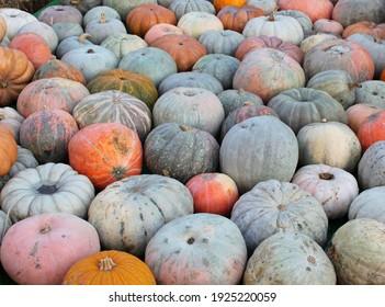 orange pumpkins for sale at the market, background