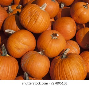 Orange pumpkins for sale  piled in a bin at a grocery store on a sunny October day