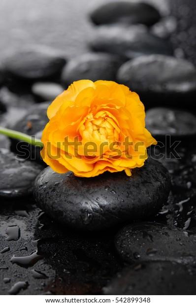 Orange ranunculus with therapy stones