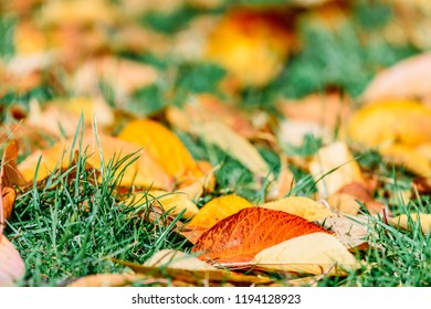 Orange And Red Autumn Leaves On Ground With Green Grass Background In Fall Season