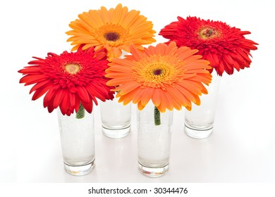 orange and red daisy flowers in vases on white