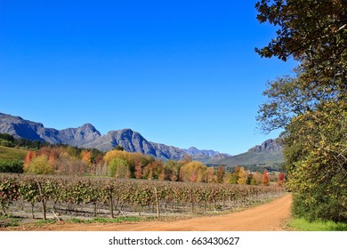 Orange and red leaves on a vine with mountains in the bac