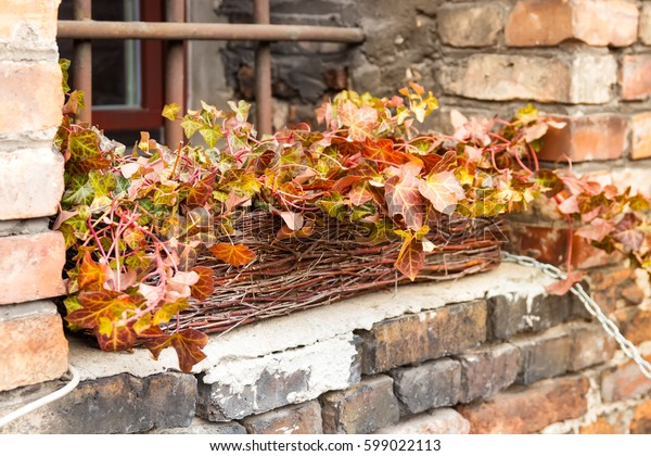 Orange and red plants on a windowsill in old brick building.