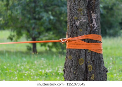 Orange rope for slacklining is tied to a tree