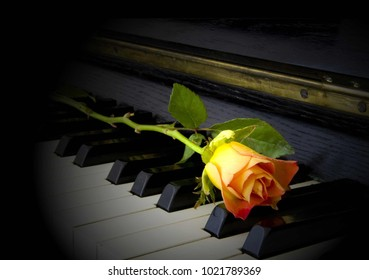 Orange rose in blossom on piano - condolence card