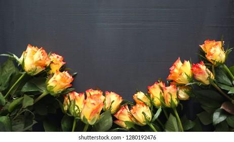 orange rose flowers on gray