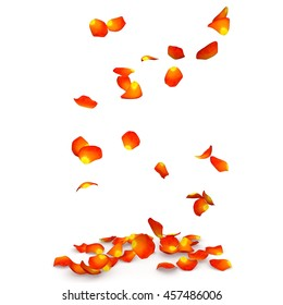 Orange rose petals flying on the floor. Isolated white background
