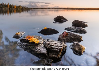 Orange rowan (or mountain ash) leaves on the stones in the dead calm lake. Bautiful autumn night at the finnish nature.