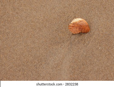 An orange seashell on the beach