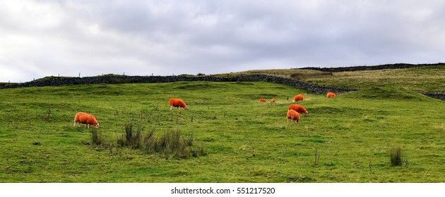 Orange Sheep to prevent rustling